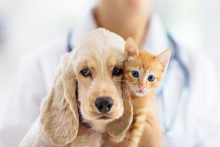 Ernährungsberater versorgt einen Hund und eine Katze