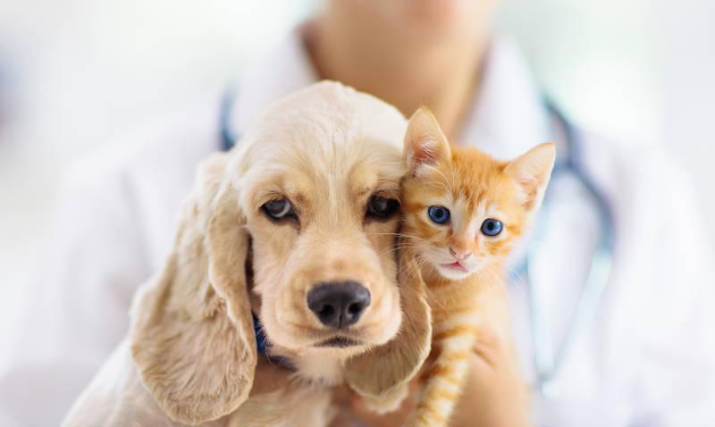 Ein Hund und eine Katze beim Ernährungsberater